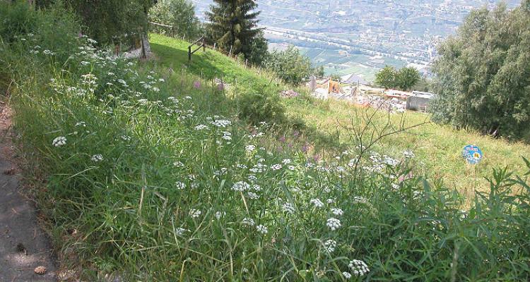Situé au lieu-dit Avouintzet. En zone chalet. Vue imprenable sur les Alpes Bernoises et la vallée du Rh&ocirc;ne.<br /> <br /> &bull; parcelles n&deg;2473 et 2474 de 739 m2<br /> &bull; en zone chal image 4