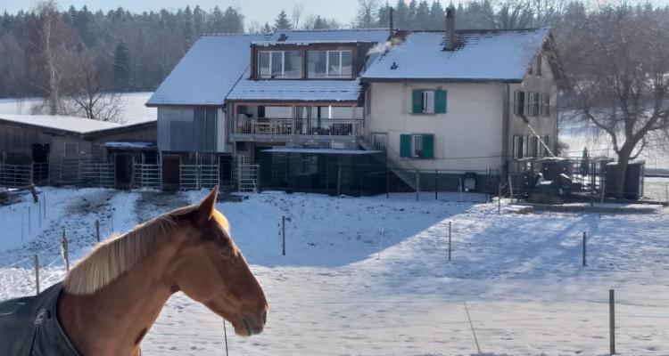 Magnifique 3,5p / 2 chambres / jardin partagé et vue - ECURIES chevaux image 8