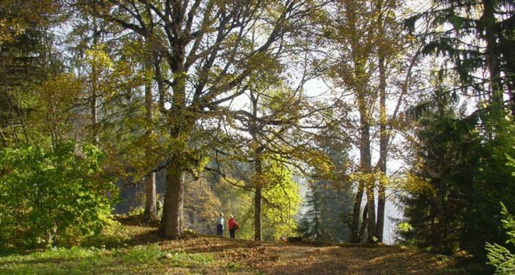 Gryon Immo vous propose un joli chalet de 2 appartements dans une nature magnifique image 2