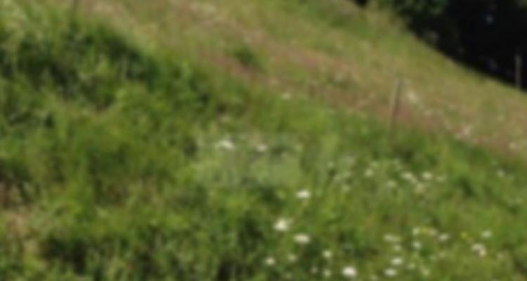 FACE AUX DENTS DU MIDI image 2
