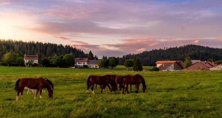 Unique et rare pour la région, nature et vue panoramique. !!! A 25 min dYverdon image 19